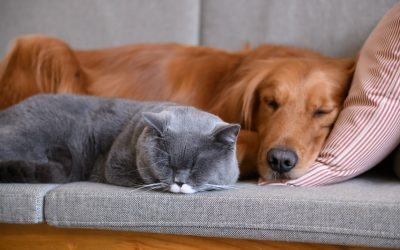 Pets and Older Adults: Benefits & Risks